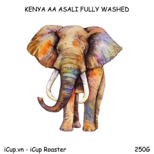 Cà phê Kenya AA Asali chế biến ướt - 250g iCup Roaster