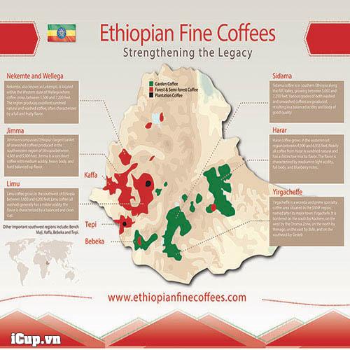 Các vùng canh tác cà phê tại Ethiopia