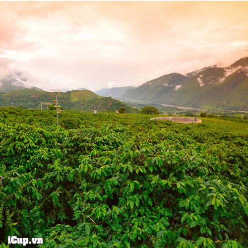 Coffee farm Nicaragua