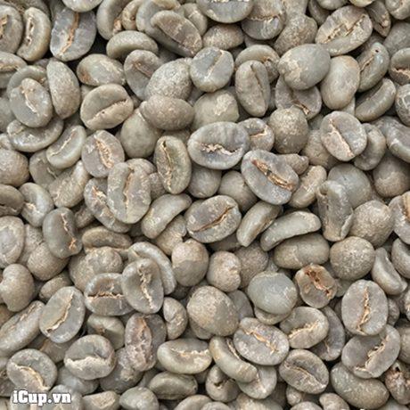 Kenya coffee specialty