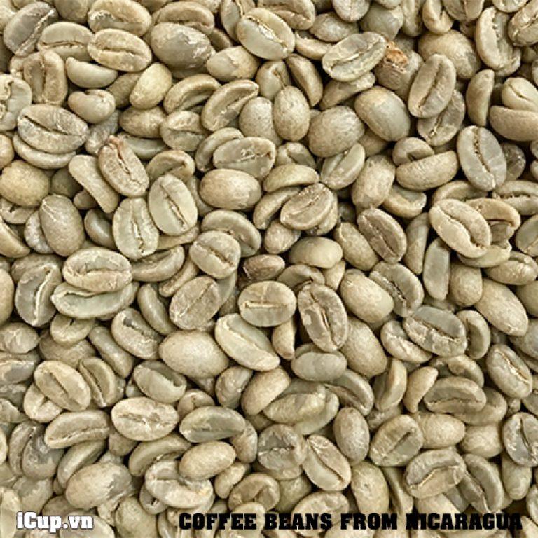 Nicaragua specialty coffee green been