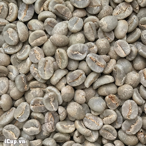 Kenya coffee specialty