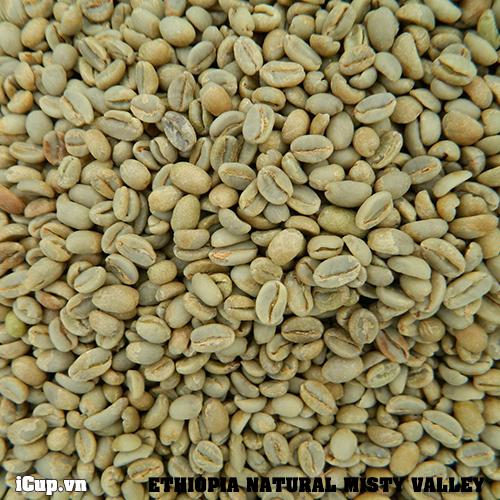 Hạt cà phê nhân Misty Valle chế biến khô có màu sắc hơi vàng - mùi thơm mạnh mẽ