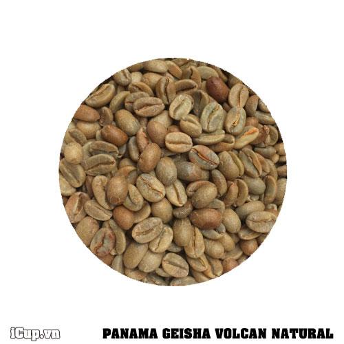 Cà phê nhân xanh Panama Geisha Volcan Natural - Trang trại Janson Geisha